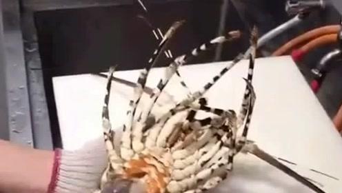 老板请所有的员工吃大餐,上台就是一只花龙虾,看着就一定好吃!