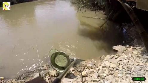 河边用鸡肠做鱼饵将钓竿撒下,结果这大肥鱼就是钓的过瘾