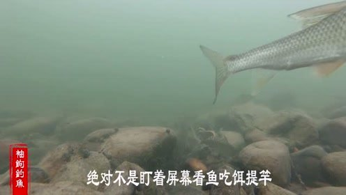 了解鱼类习性鱼才钓的多,通过水下观鱼器你会了解更多鱼类习性