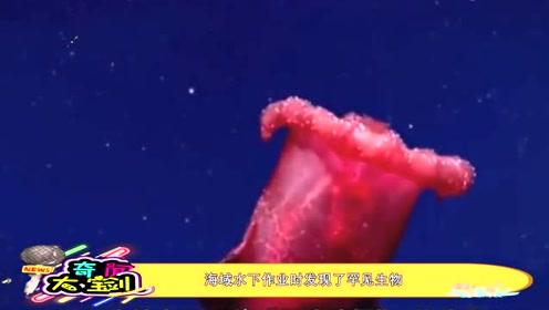 """深海新发现,这种""""无头戏鸡""""是深海新物种,类海参不知道好吃不"""