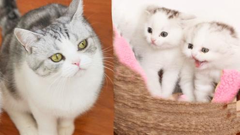 家里九只猫咪性格迥异,最胖的那只连小奶猫都打不过,白长一身肉