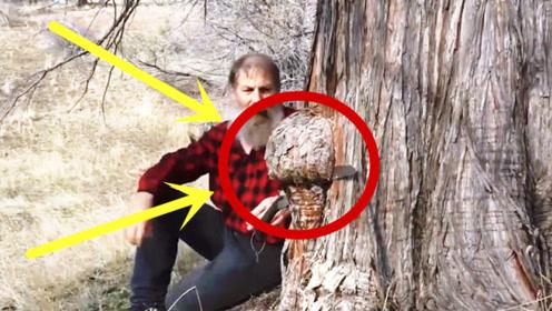 老木匠野外偶遇一大树瘤,直接锯了回去盘它,成品简直巧夺天工!