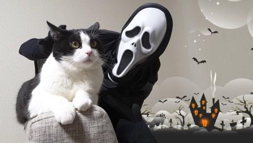 老外戴恐怖面具想吓唬猫咪,小喵内心毫无波澜:我饿了!
