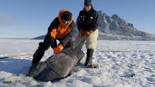 老人在冰面上钓鱼,直接拉上来一条大家伙,寿命至少500年!