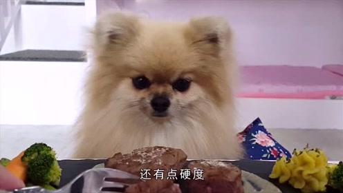 别再给博美喂米饭啦,你以为是爱它实际是害他!