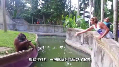 男子给猩猩丢了根香蕉,随后猩猩也丢过来一个东西,没想到居然是香蕉皮