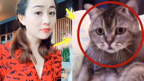 """这只猫是跟谁学的?看的美女都不好意思了,真是一只""""色狼"""""""