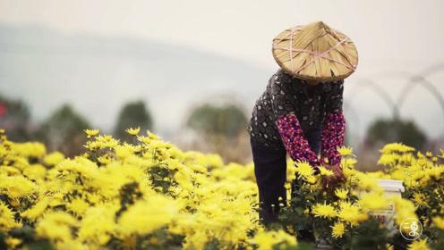 航拍镜头下的杭州乡村,每一帧都想截屏