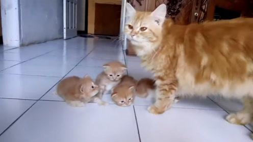 四只小猫崽一起撒娇卖萌,猫妈妈一视同仁,画面超级暖心和甜蜜