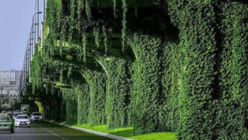 为啥我国高架桥会种这种植物?它们有什么作用,看完后真的是涨知识了