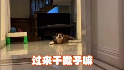现在的狗狗怎么都这么现实啊,你有吃的就是爹娘,没吃的啥也不是