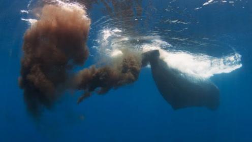 """180吨的蓝鲸排泄现场,小鱼追着吃""""排泄物"""",摄影师记录这一刻"""