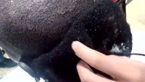 理发师:要不是我以前剪过羊毛,遇到这种发型,我还真不知怎么办?