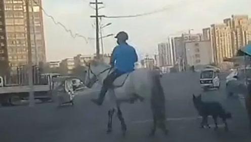 """商丘市区现""""白马王子"""" 身后还跟着一只黑色猎犬"""