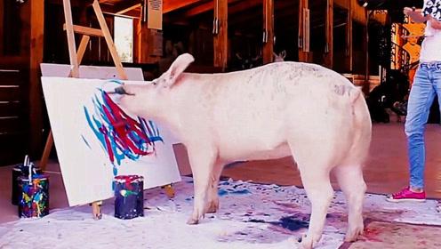 这头猪厉害了,画的画卖出上万,堪称猪界毕加索!