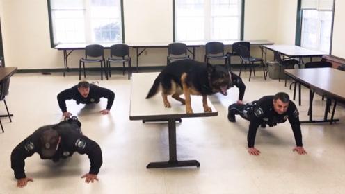 警察正在做俯卧撑,狗狗看后的反应,请大家憋住不要笑!