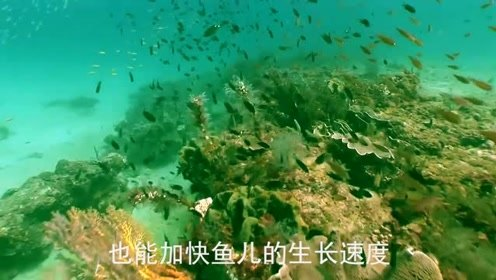 黄河水浑浊且泥沙多,但里面的鱼为何又大又肥呢?是吃土长大的吗?