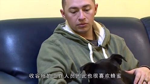 励志狗狗即使被安乐死,脸上依旧挂着笑容,最后被好心人收养