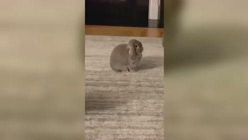 果然动如脱兔说的没错!