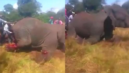 残忍!肯尼亚大象袭击居民被围攻砍伤,满身鲜血倒地身亡