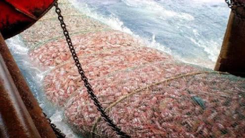 世界上最牛的捕鱼船,渔网却突然拉不动,下水一看发现情况不对!