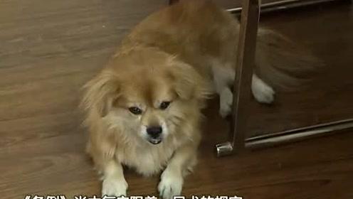 广州拟出台更严养犬规定 新举措服务与惩罚并行