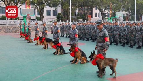 8只帅萌军犬的入列仪式 萌萌的狗狗一招一式都像个军人的样子