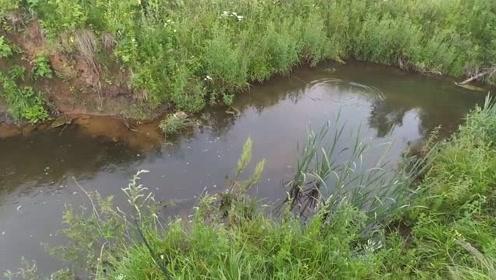 清澈见底的小河沟,不甩两杆,都不知道里面有鱼