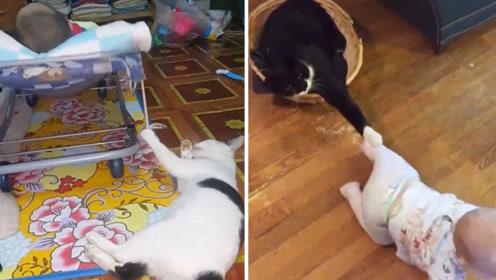 别人家的猫咪VS你家的猫咪,果然优秀的都是别人家的!