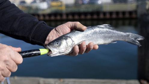 """老外发明这钓鱼神器,能让死鱼饵""""起死回生"""",大鱼一钓一个准"""
