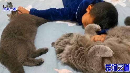 撸猫现场,小男孩撸猫撸得要睡着了,小胖猫突然反手撩闲小哥哥