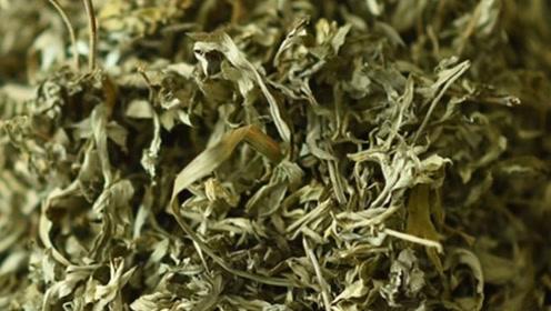 """这种野菜被称为""""护肝王"""",有清热凉血延缓衰老的作用,看完涨知识了"""