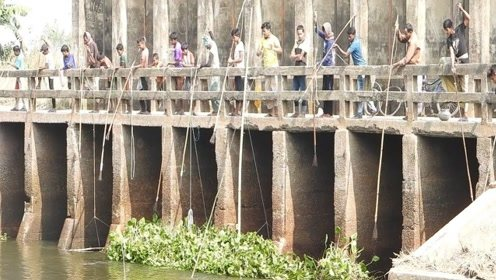 印度人是如何捕鱼的?一排人站在桥上扔鱼叉,大鱼却没见到一条