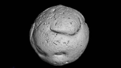 先有鸡还是先有蛋?贵州发现6.1亿年前的笼脊球化石给出答案