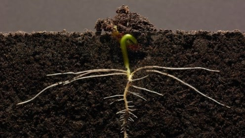 老外用摄像机记录种子成长全过程,画面令人惊艳