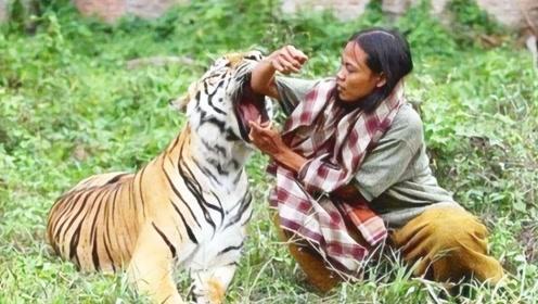 女子放生老虎,5年后偶然相遇,下一秒不敢相信
