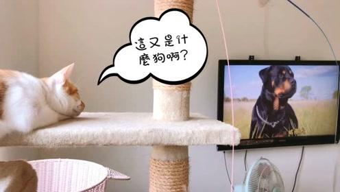喵星人:看个电视粑粑还一直在旁边捣乱,烦死人家啦!