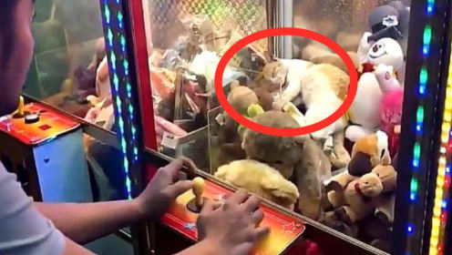 娃娃机中出现猫咪,路人连连投币,猫咪被夹起的一刻太搞笑了