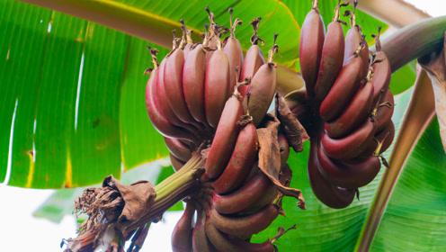 """世界""""最罕见""""的4种水果,尤其是最后一种,有钱也不一定能买到!"""