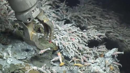 科学家探测到深海火山口的虾,450度都不熟,网友:这家伙怎么吃