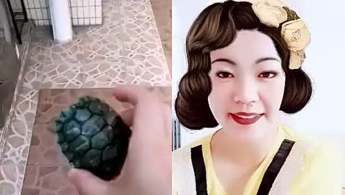 搞笑合拍,看我把小乌龟藏起来,是为了什么