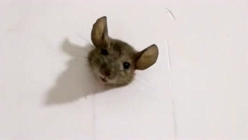 老鼠天生会打洞,但是你有没有考虑过后果,原谅我不厚道的笑了!