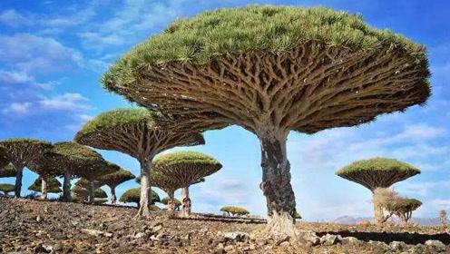 世界各地那些奇形怪状的树,你听过吗?