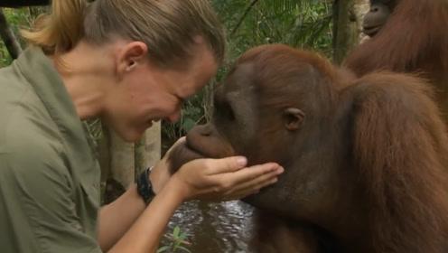 外国女孩被爱伤害,表示以后要与大猩猩结婚,免得遭背叛!