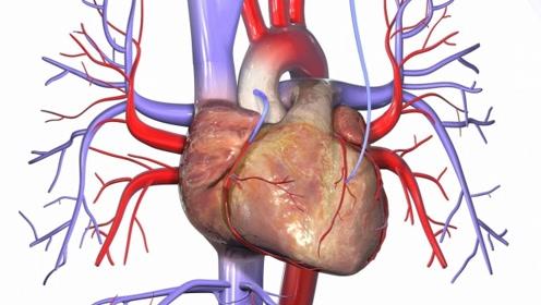 心脑血管疾病预防:记住喝对水,预防血栓