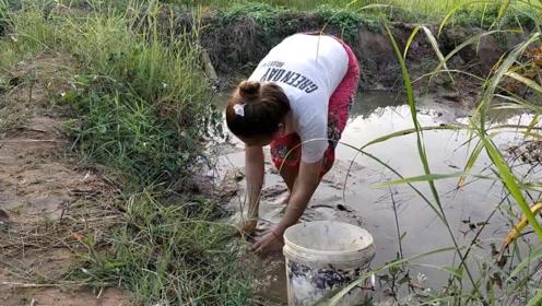 水坑干涸,黑鱼塘角鱼在水坑挣扎,农村女孩一路抓鱼,真过瘾