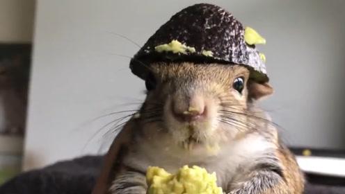 老外为防止松鼠偷吃鸟食,在柱子上抹油,没想到松鼠这么有耐心!