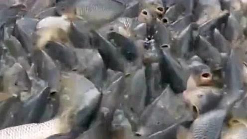看来这鱼都不用钓了,直接用渔网捕就可以,并且还能捕到不少鱼!