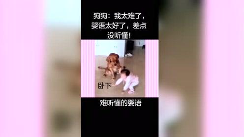 婴语有多难?狗子一脸懵,听懂后没让宝宝失望!