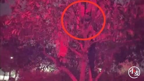 南阳一女孩大晚上爬到树上玩 消防员:要么你自己下去,要么我给你扛下去
